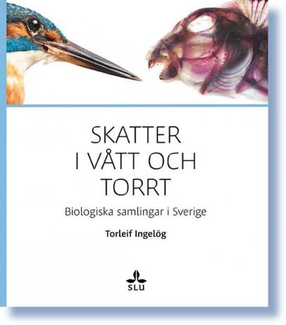 2013-11-18-VattoTorrt