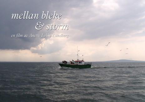Bleke-o-Storm-600px